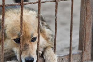 Администрация Усинска подала заявку на отлов безнадзорных животных в 2021 году