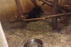 Под Сыктывкаром нашли медвежонка, которого реабилитируют и выпустят в дикую природу