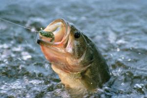 Секреты  для успешного улова