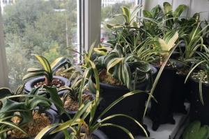 Подготовить комнатные растения к зиме